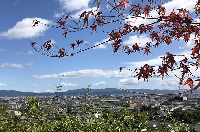 鈴虫寺のお庭散策