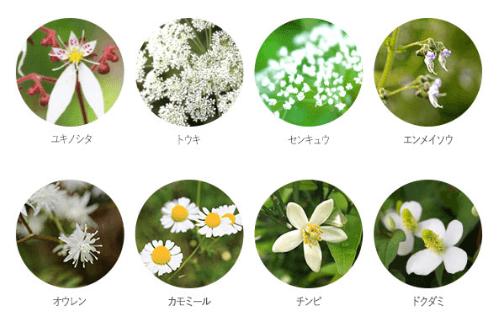 白花八草エキス